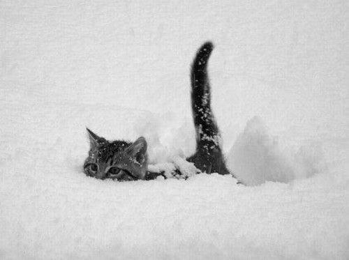 12chats-neige